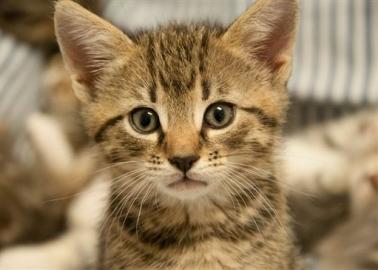 Meowy Catmas (and A Hoppy New Year)