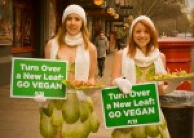 Lettuce Ladies Take On Gaga