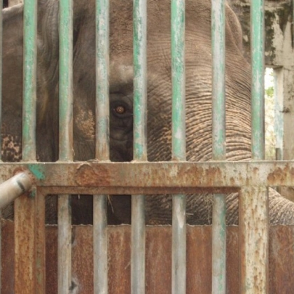 Please Expedite Mali's Transfer to a Sanctuary in Thailand