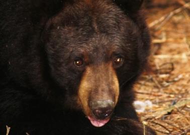 PETA Adopts a Bear as a Wedding Gift for the Royal Couple