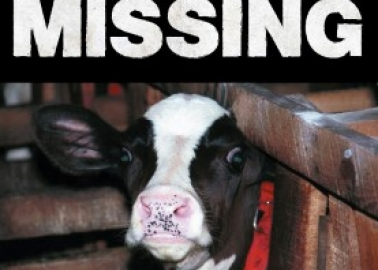 Missing: Charlie, 2 Days Old! Can You Help?
