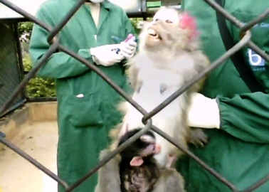 Inside Experimenters' Monkey 'Factory Farm'