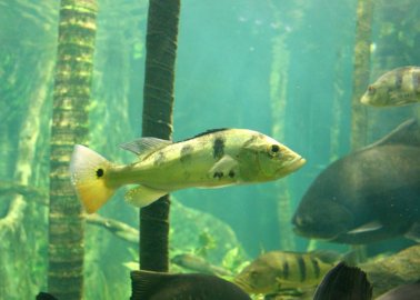 Victory for Fish – Who Are Smarter Than You Think!