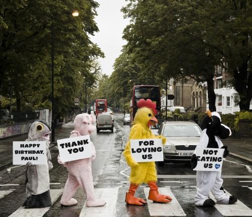 PETA's Abbey Road Album Cover Homage