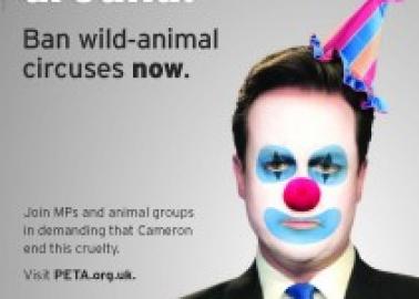 David Cameron, Stop Clowning Around – Ban Wild Animal Circuses Now!