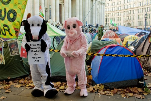 PETA's 'pig' and 'cow' outside St. Paul's Cathedral