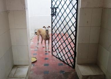 REVEALED: Shocking Indian Government-Run Dog Hellhole