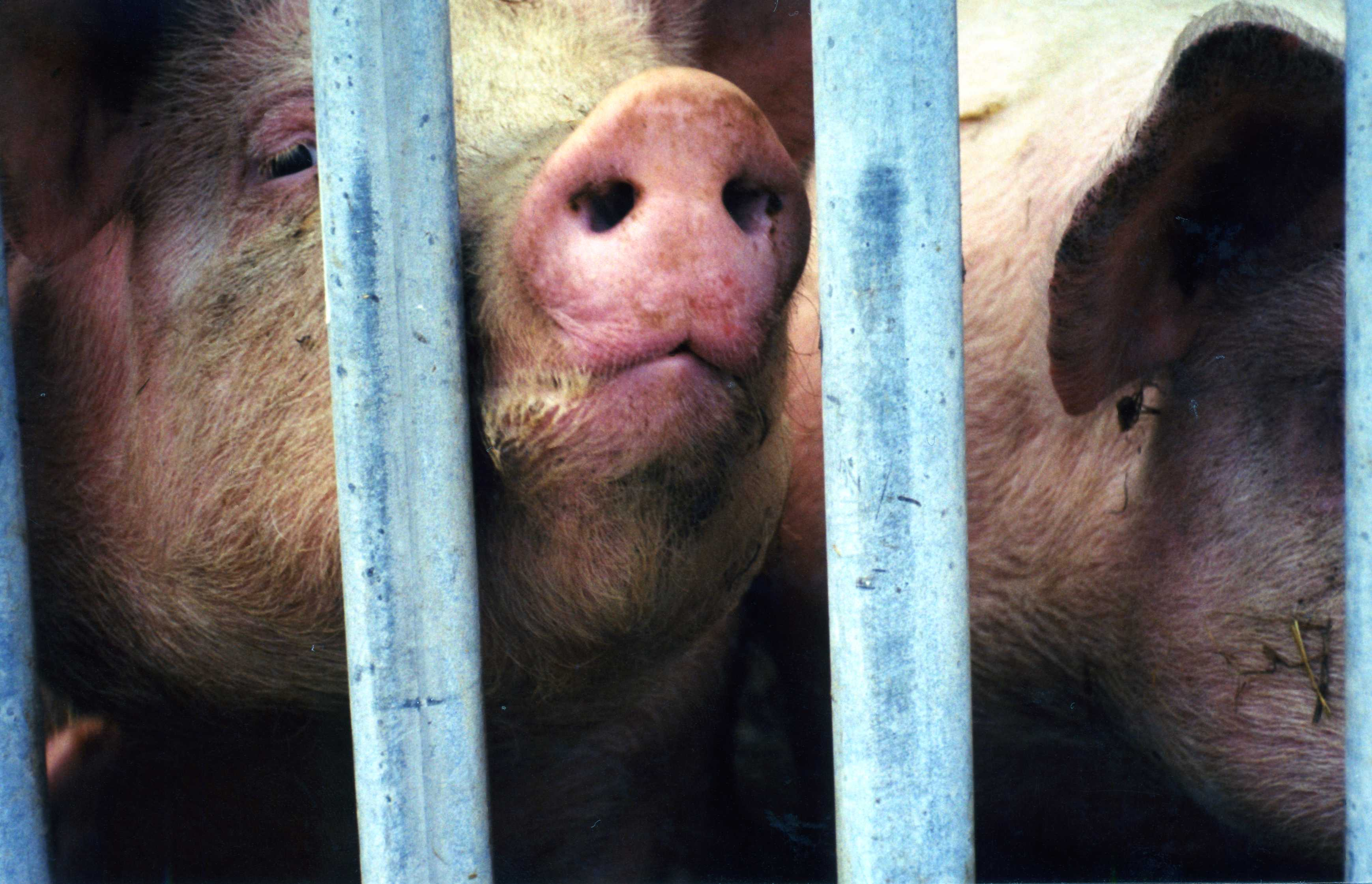 Meat | Animals Are Not Ours To Eat | PETA UK