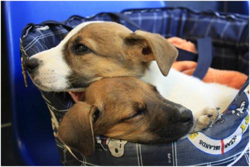 PETA Rescued Puppies