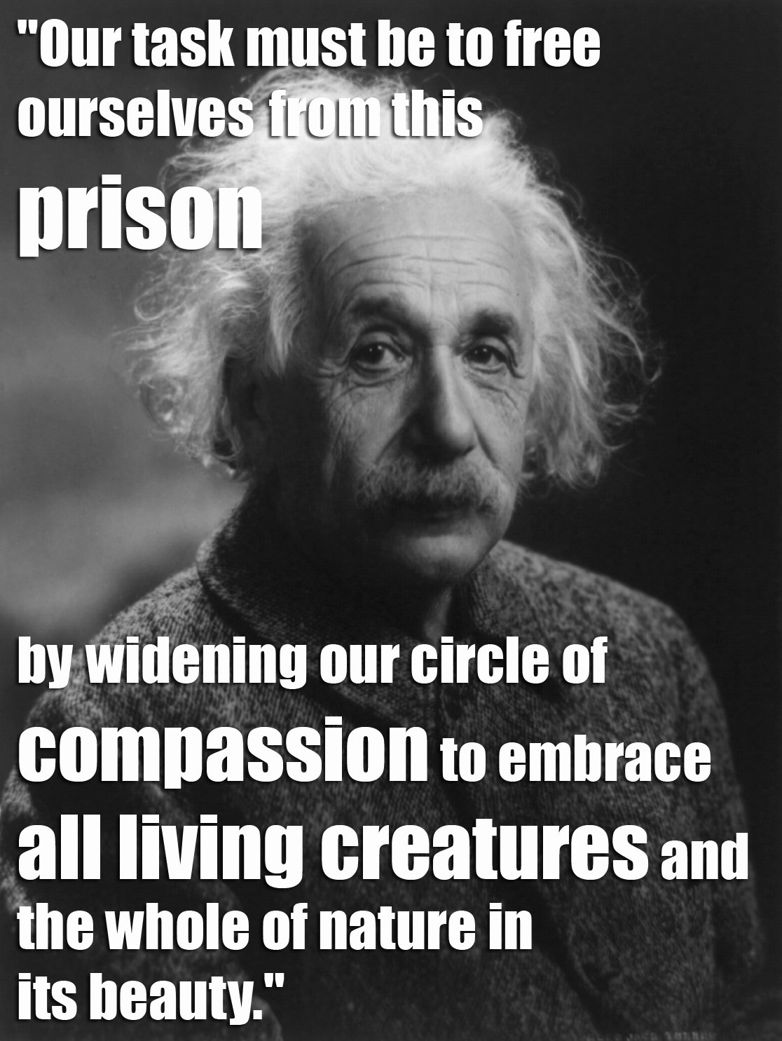 Animal Abuse Quotes Entrancing 17 Quotes From Famous Thinkers Who Got It Right About Animals