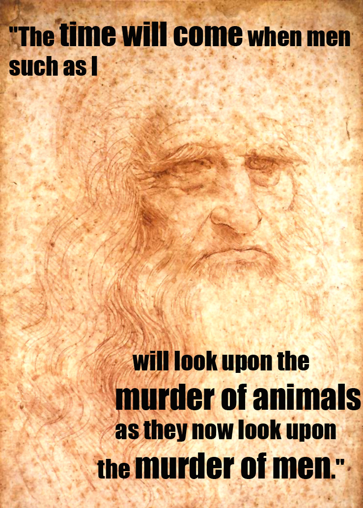 Animals Quotes Gorgeous 17 Quotes From Famous Thinkers Who Got It Right About Animals