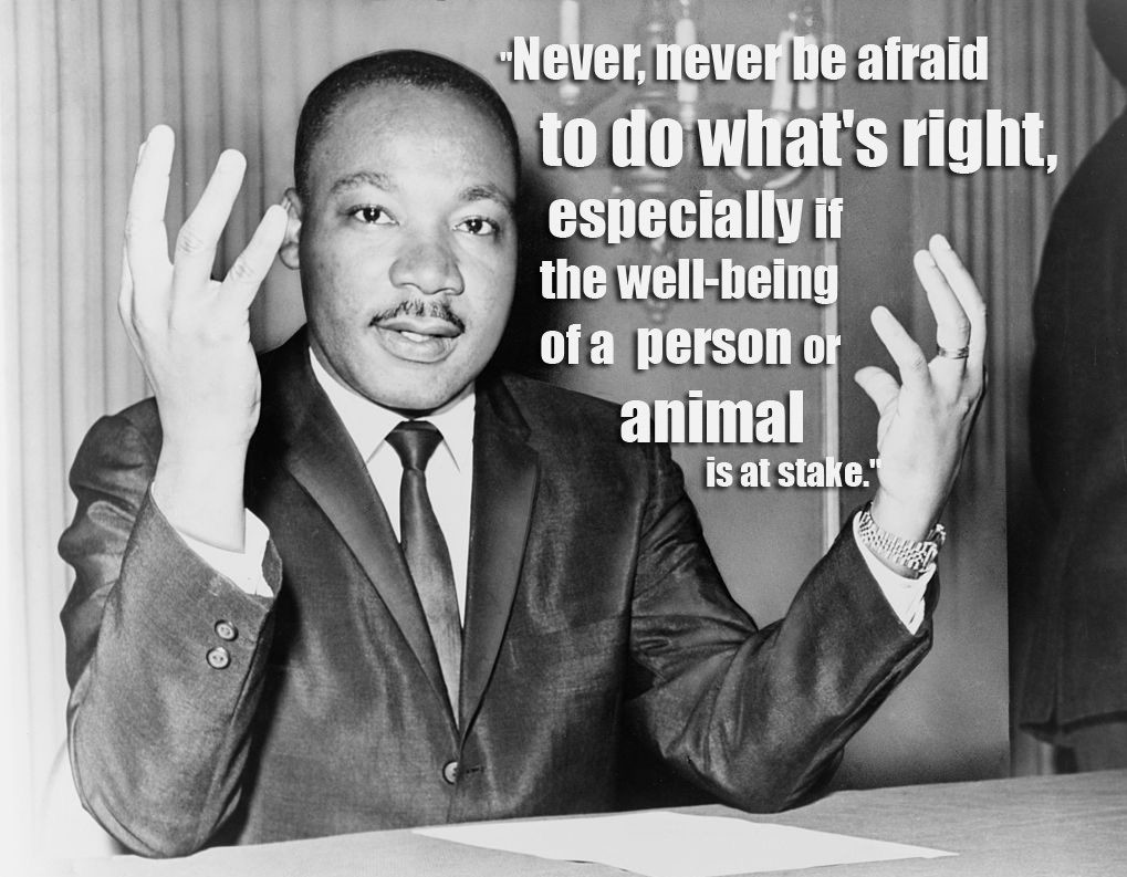 16 Quotes From Famous Thinkers Who Got It Right About Animals