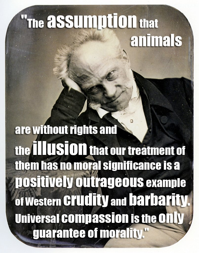 Animal Rights Quotes Entrancing 17 Quotes From Famous Thinkers Who Got It Right About Animals