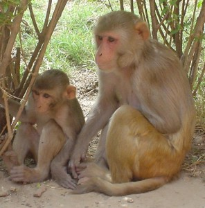 UK primate trafficking airlines macaques