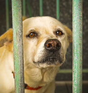 Millions of dogs are abandoned and in need of good homes
