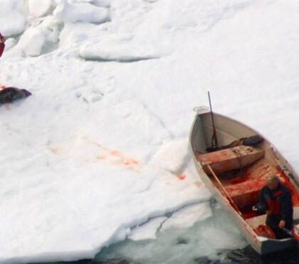 Help Stop Canada's Commercial Seal Slaughter
