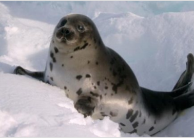 Pamela Anderson to WTO: Save Seals, Uphold EU Seal-Fur Import Ban