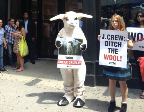 Sheep Demo PETA J.Crew