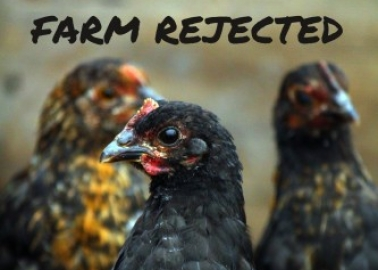SUCCESS! Wychavon District Council Rejects Cruel 'Chicken City'