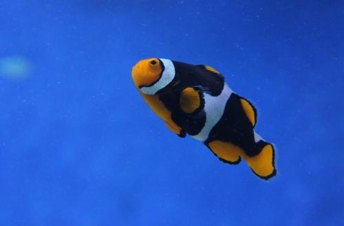 Stock-fish-500x333.jpg