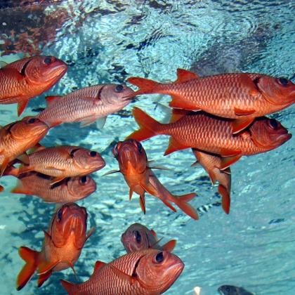 Fish and Sea Animals