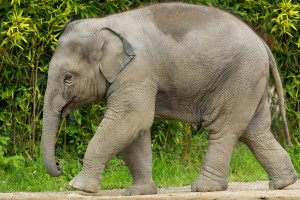 India bans use of elephants in circuses!