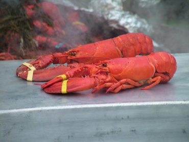 Lobsters feel pain, too