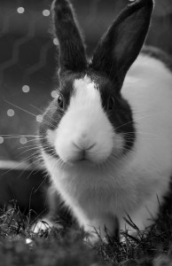 REACH chemcial testing programme harms animals