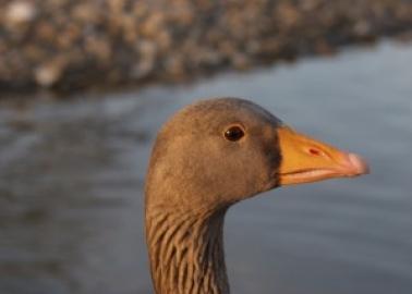 UPDATE: Fortnum's Dubai Will Be Foie Gras-Free!