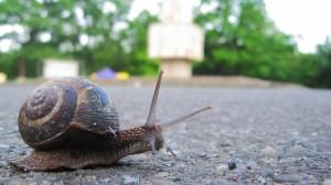 Stock snail park