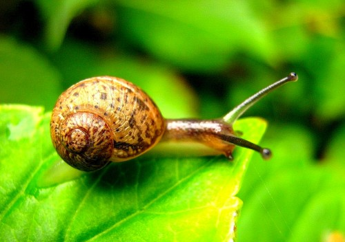 The ethical way to manage our garden without harming snails