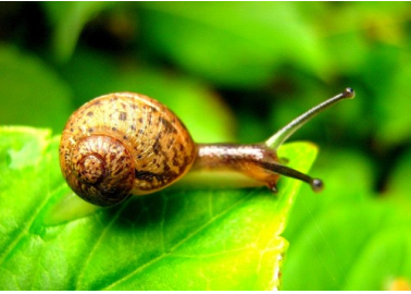 Living in Harmony With Snails