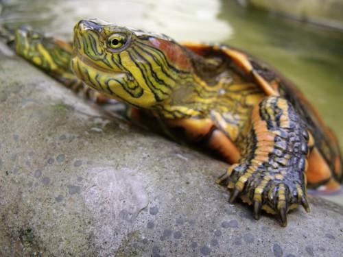 Teenage Mutant Ninja Turtles pets uk