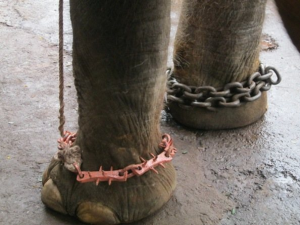 Sunder-Chains-300x225.png