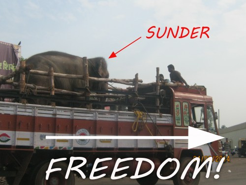 Sunder freedom copy