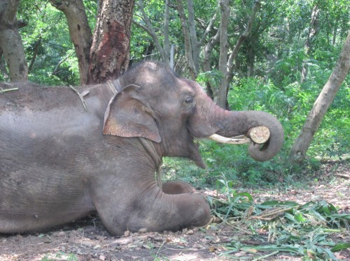 Sunder in new home