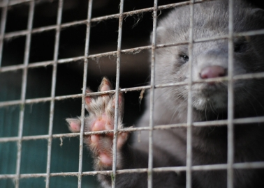 Five Minutes of Your Time Could Help Get Fur Sales Banned in the UK!