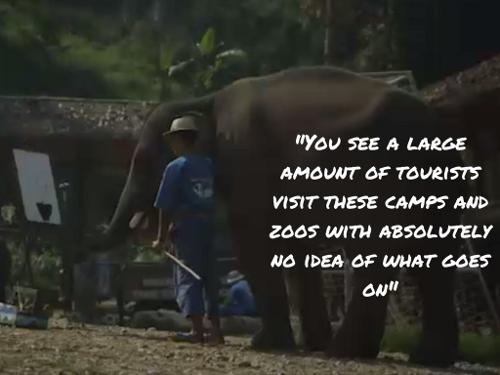 An Elephant Never Forgets - Thai Elephant Tourism