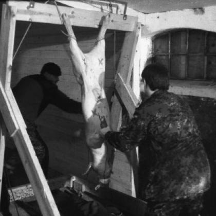 The MoD Is Killing Animals in Horrific Training Exercises