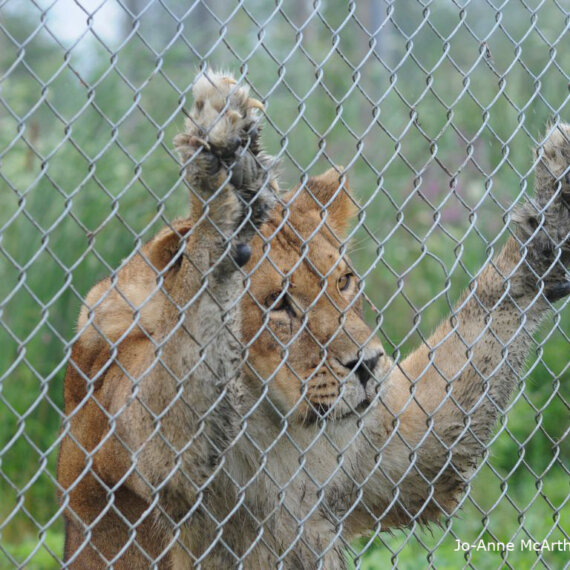 Animals in Zoos: Condemned to a Life Behind Bars