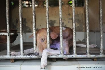 Homeless dog waits in shelter