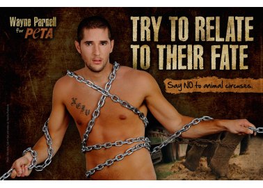 Cricketer Wayne Parnell Hits Circus Cruelty for Six in New PETA Ad