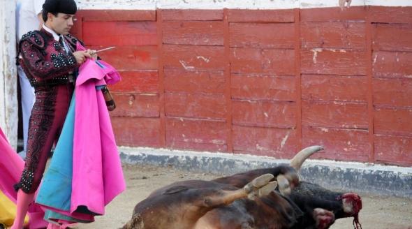 We-Animals_Bullfighting.jpg