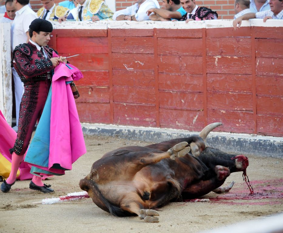 We Animals_Bullfighting