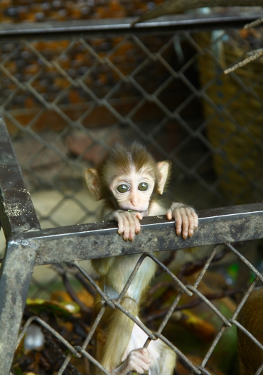 Baby monkey in a zoo