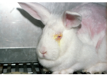 PETA Gets Government to Do Its Job