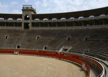 Victory for Bulls: Catalonia Bans Bullfighting!