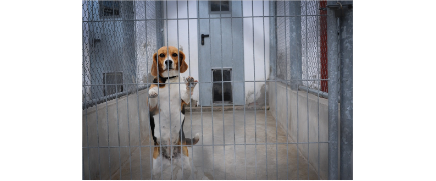 Final Appeal: Please Take Action Now for the AstraZeneca Beagles