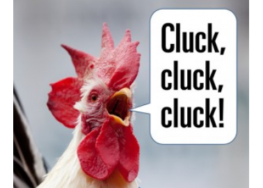PETA to Distribute Revolutionary Chicken-Voice Translators