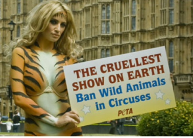 Hurrah! Government Finally Acts to Ban Wild Animals in Circuses!